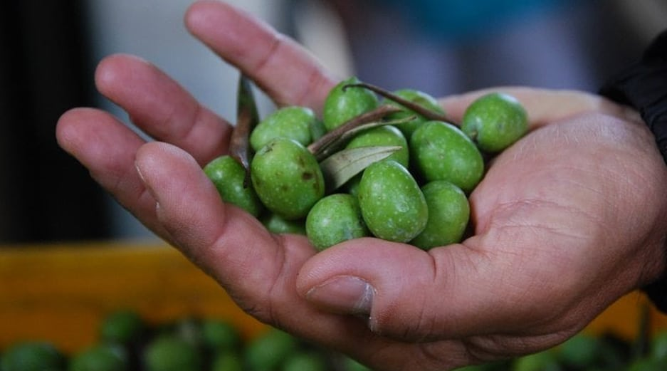 Malta Fruit and Vegetables