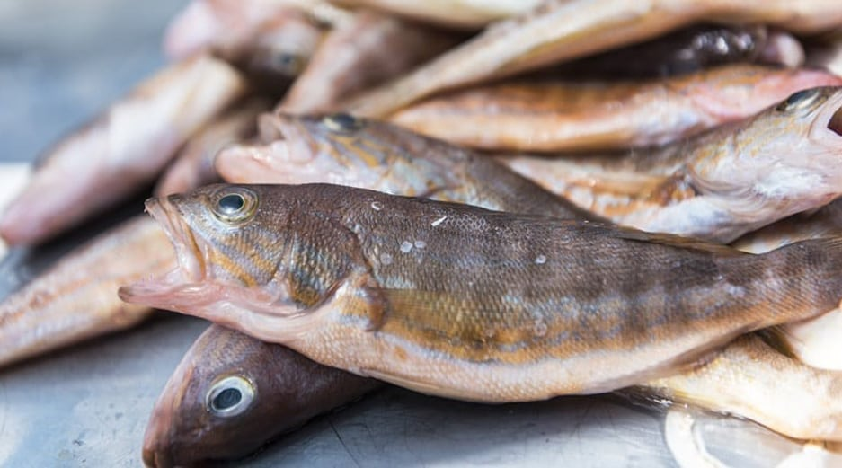 Malta Food - Fish